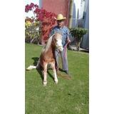 Vendo Pony Excelente Rienda ( Ademas Se Echa Y Sienta)