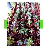 Adorno Para Recámara, Plantas Miniatura, Entrega Personal Df