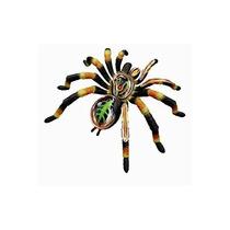 Tb 4d-vision Tarantula Spider Anatomy Model