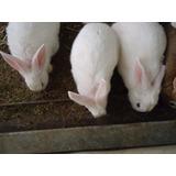 Conejos Con Instalaciones 100% En Producción Remate