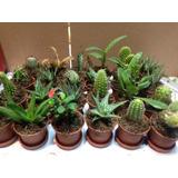 Cactus Con Suculenta Minii Mas Gastos De Envío
