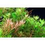 Linea Azoo Plus Acondicionadores Plantas Acuaticas Rojas