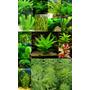 Plantas Acuáticas Gran Variedad