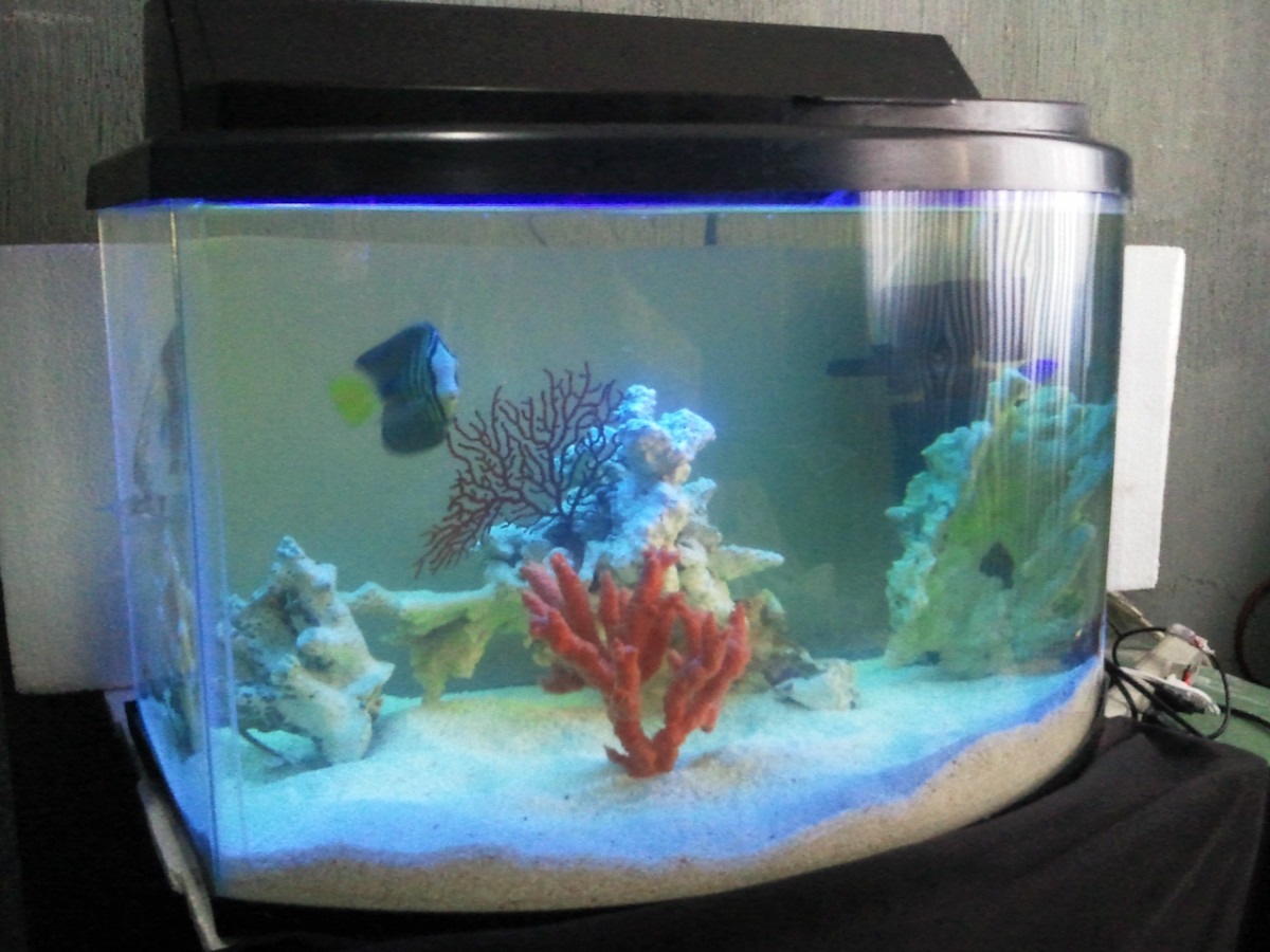Acuario peces marinos pecera panoramica marina paquete for Peceras con peces