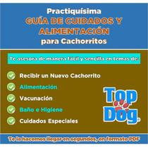 Guía De Cuidados Y Alimentación Cachorritos | Practiquísima!