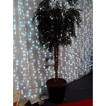 Ficus Artificial Decorativo