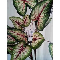 Arboles,follaje,plantas Y Flores Artificiales Op4