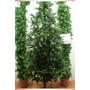 Arbol De Navidad Verde Frondoso
