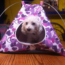 Accesorios Para Perros (casas De Campaña)