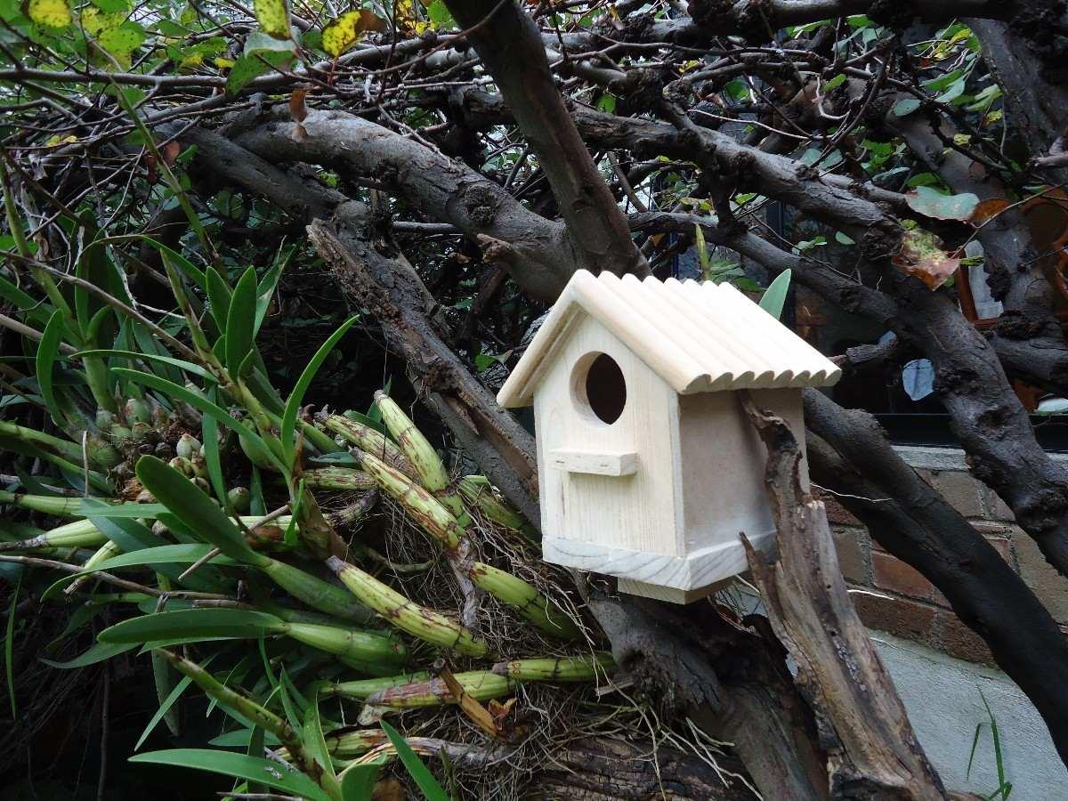 Casas para pajaros de madera al natural en mercadolibre - Casa para pajaros ...