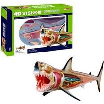 Modelo 4d Vision Gran Tiburón Blanco Anatomía