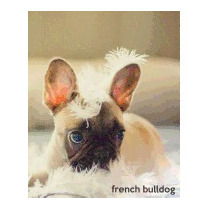 French Bulldog: A Gift Journal For, Todayspetpublishing Com