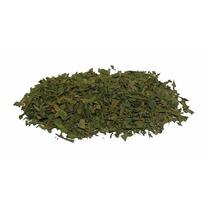 500 Gramos Epazote Verde Partes Aereas Deshidratadas