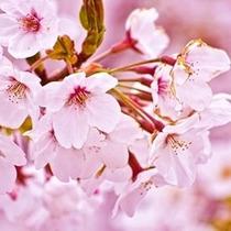 Saborizante Concentrado Tpa/tfa Cherry Blossom (pg) 60 Ml