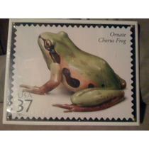 Placa Ornate Chorus Frog