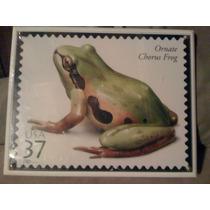 Placa Ornate Chorus Frog