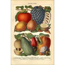 Lienzo Tela Frutas Del Paraíso Alemania 1890 74 X 50 Cm