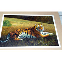 Pintura Al Óleo: Tigre En Medidas 60 X 90 Cm Maa