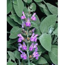 60 Caps Osteoherbs Redmexplam Plantasi Autenticas