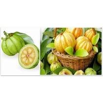 Frasco Garcinia Plus Organic 60 Caps Tamarindo Malabar