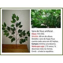 Hojas De Ficus Daa