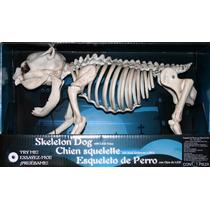 Esqueleto De Perro Con Luz Led En Los Ojos Para Hallowen