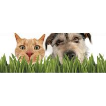 Semillas Petgrass/catgrass Ayuda Ladigestion De Perros,gatos
