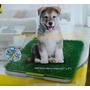Tapete Entrenador Pasto Sintetico Doggie Grass 68x43 Perros