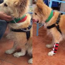 Ferula Para Perro Soporte Carpos Protesis Protector Carcan