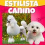 Estetica Canina 2015 Videos Y Libros Paso A Paso+ Regalos