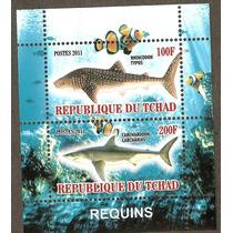 Chad Hojita Fauna Marina Tiburones 2011