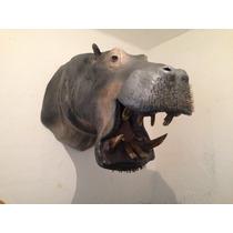 Animales Disecados 100% Artificiales Hipopotamo