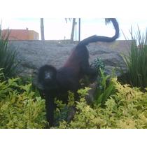 Animales Disecados 100% Artificiales Mono Aullador
