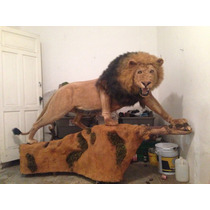 Animales Disecados 100% Artificiales. Leon Africano Y Tigres
