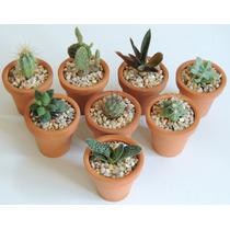 Cactus, Plantas Suculentas En Maceta De Barro 5cm, Adorno