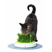 Kit De Hierba Jardín , Desarrollador De Sentidos Para Gato