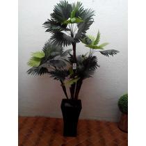 Plantas Deseda Palma Decorativa Maa