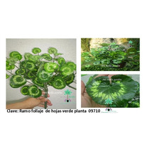 Plantas Para Macetas Tipo Follaje Bvf
