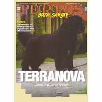 Revistas De Perros De Pura Sangre El Terranova Vea El Video