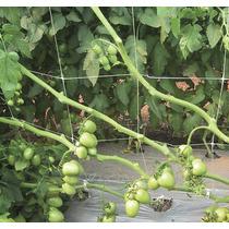 Malla Tutora Para Soporte De Chiles Y Tomates 1.0x1500 M
