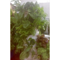 Sistema De Cultivo Hortalizas Plantas Hidroponia Jardín