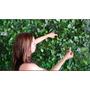 Muros Verdes Varas De Ficus Artificial