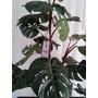 Arreglos Con Plantas Arboles Y Flores Artificiales Vbf