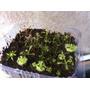 Plantas Carnivoras Paquete 5 Plantas Por $80