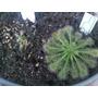 Terrario Plantas Carnívoras