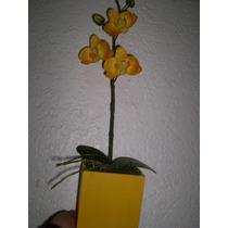 Orquideas En Flor En Maceta Mdn
