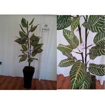 Plantas Croton, Palma Maa