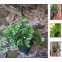 Arreglo Floral Y Plantas Artificiales Vbf