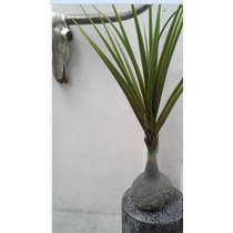Planta Maguey Artificial