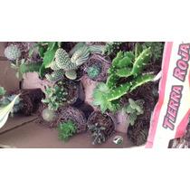 Cactus Miniatura Caja De 20 Piezas